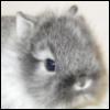kroliki_karliki userpic