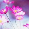 Beth: misc - flowers