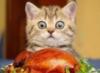 LOL, chicken, cats