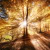 luminous_thing userpic