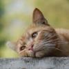 грустный кот 1