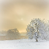 Winter: Tree (Sunrise)