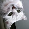 cat-updown