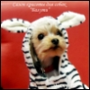 стрижка собак, одежда для собак, йоркширский терьер, груминг собак