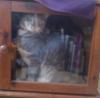 scouse_cat userpic