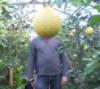 Лимонная голова