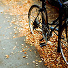 leaves, Fall, bike