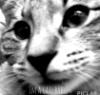 m0osho0 userpic