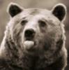 медвежковые дразнилки