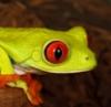 wildfrog userpic