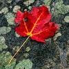 little_critic userpic