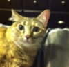 ZoeZoe Cat