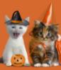 Halloween kittes