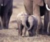 слонятки