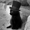 black_cat_24_gentelman
