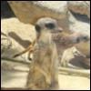 voito userpic