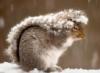 мороз, холодно, зима, снег