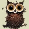 crazy_owl