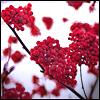 crimson flowers, winter