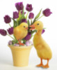 utka_duck