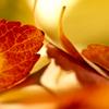 Kim: (Stock) Fall Leaves