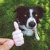 собака одобряка