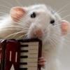musical rat