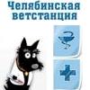 ветеринарный врач, ветстанция, ветеринарная станция, ветврач, ветеринар