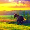 equine (1)