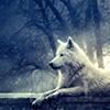 shadows_wolf06