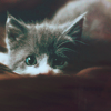 tenstraycats userpic