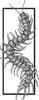 archscolopendra userpic