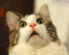 кот в удивлении