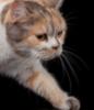 cats_aristocrat userpic