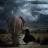 со слоном