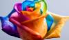 n_roza userpic