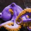 sallyoctopus userpic
