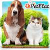 petflat userpic