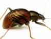 beetle8910