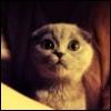 pante_rrra userpic