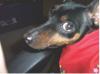 sidney_mcribbs userpic