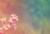botanicaliru userpic