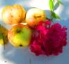 яблоки и флоксы