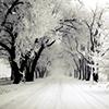 Winter: Tree (Snowy)