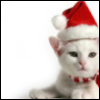 white christmas cat