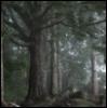 tigerthin userpic