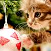 leesa_perrie: Christmas cat