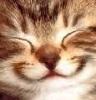 barsik_seacat: котенок улыбака