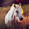 equine (3)