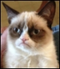 troll_elf: упоротый кот